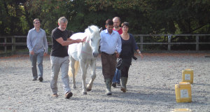 equine therapy group exercise