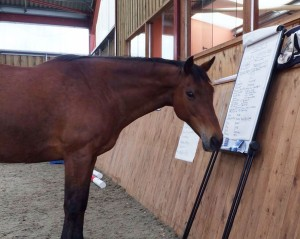 equine therapy horse reading flip chart